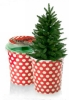 Вырасти свою новогоднюю елку